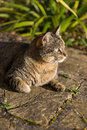 Tabby cat taking a sunbath on the ground Stock Photography
