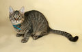 Tabby kitten in blue collar rests on yellow Royalty Free Stock Photo