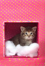 Tabby kitten in  a box Royalty Free Stock Photography