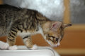 Tabby kitten one adorable small Stock Image