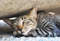 Tabby kitten a sleepy on a lazy afternoon Royalty Free Stock Photo