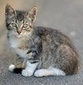 Tabby kitten in the street