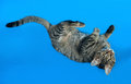 Tabby kitten with yellow eyes lying on blue Royalty Free Stock Photo