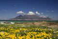 Table mountain spring Stock Photos
