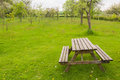 Table in orchard garden wooden with benches Royalty Free Stock Image