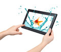 Tablet interactivity and high performance concept water splash with gold fish in conceptual design Stock Photos
