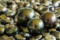 Tahiti black pearl on keishi coloured pearls from keishis Royalty Free Stock Images