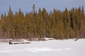 Taiga winter landscape and dogs pull musher sled Royalty Free Stock Photo