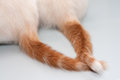 Tails entwined red two white cats on the floor Stock Image