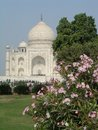 Taj Mahal and oleander Royalty Free Stock Image