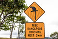 Take care of theTtree Kangaroos sign Royalty Free Stock Photos