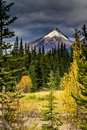 Taken from along the Ice Fields Parkwayl Banff National Park, Alberta, Canada Royalty Free Stock Photo