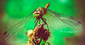 On takeoff photo of dragonfly while it starting to Stock Photos