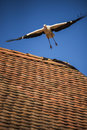 Takeoff stork from a roof blue sky in the background Royalty Free Stock Images