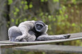 Taking it easy young monkey relaxing on a sunny day Royalty Free Stock Photo