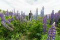 Taking photo of New Zealand Lupins Royalty Free Stock Photo