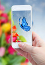 Taking picture with smart phone against summer background woman hand of blue butterfliy flowers Royalty Free Stock Photo