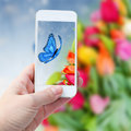 Taking picture with smart phone against summer background woman hand of butterfliy flowers Stock Photos