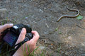 Taking a shot of a blind worm detailed Royalty Free Stock Photo