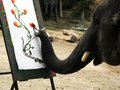 Talented artist the elephant draw the picture Royalty Free Stock Photo