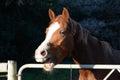 Parlare cavallo