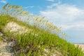 Tall Beach Grass on Coquina Beach at Nags Head Royalty Free Stock Photo