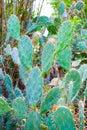 Tall cactus in a cactus garden