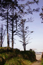 Tall conifers along coastal hills Royalty Free Stock Photo