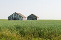 Tall grain farm buildings peeping out from a field of near wilcox saskatchewan canada Royalty Free Stock Photos