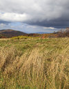 Tall grass in the field of max patch bald area in north carolina Stock Photo