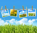 Tall grass with four pictures on clothesline Royalty Free Stock Photo