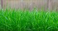Tall grass grows uncontrolled in a yard Stock Photography