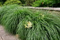 Tall grass in landscaped garden with tiger lilies tucked throughout long stone wall and Stock Photography