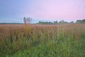 Tall grass prairie at dawn landscape of fort custer state park michigan usa Stock Image
