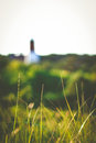 Tall grass strands of green and yellow with a cape cod lighthouse in the background Stock Images