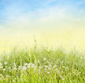 Tall grass with white dandelions on blue sky background Stock Images