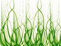Tall Green Grass and Weeds