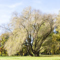 Tall and half bare tree in autumn grow on grass field Stock Photography