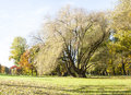 Tall and half bare tree in autumn grow on grass field Royalty Free Stock Images