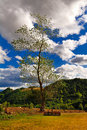 Tall leafy tree and clouds Royalty Free Stock Image
