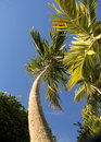 Tall Palm Tree Ground View Stock Photo