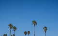Tall Palm Trees Under the Sky