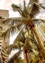 Tall skyscrapers, walkways and beautiful palm trees. Palm trees planted along the road, the tropics Royalty Free Stock Photo