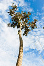 Tall Tree Royalty Free Stock Photos