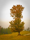Tall tree in fall Stock Photos