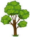 A tall tree illustration of on white background Royalty Free Stock Photo