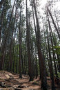 Tall trees in algonquin park Royalty Free Stock Photography
