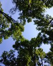 tall trees in the forest, reach for the sky and create a circle for text Royalty Free Stock Photo