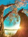 GOLD COAST, AUSTRALIA Budds Beach Trees at Sunset