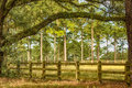 Tallahassee countryside wooden fence meadows and tall oak and pine trees in florida Royalty Free Stock Photos